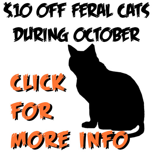 Celebrating Feral Cats in October!