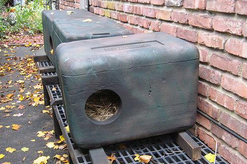Feral shelter
